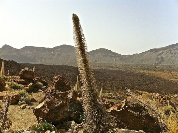 Ancient Arid Climate Canary Islands Clear Sky Day Famous Place Geology History International Landmark Landscape Non-urban Scene Old Ruin Outdoors Physical Geography Remote Rock Rock Formation Rough Teide National Park Tenerife Tourism Travel Destinations