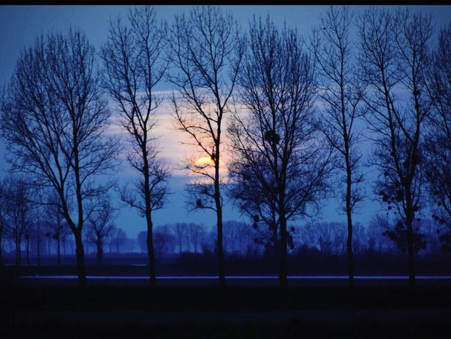 Bare Tree Tree Sunset Silhouette Tranquil Scene Branch Tranquility Scenics Beauty In Nature Tree Trunk Nature Idyllic Non-urban Scene Cloud Sky Solitude In A Row Outdoors Majestic