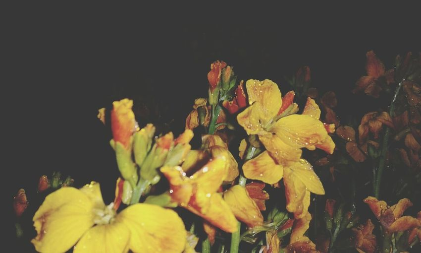 flowers Beautiful ♥ Nature Black&Yellow