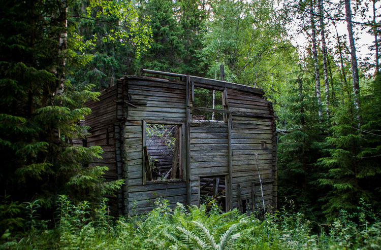Architecture Broken Forest Mill Nature Old Rotten Rottenwood