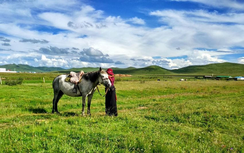 Horse Horse Riding Master Grass And Sky Grassland EyeEm Selects