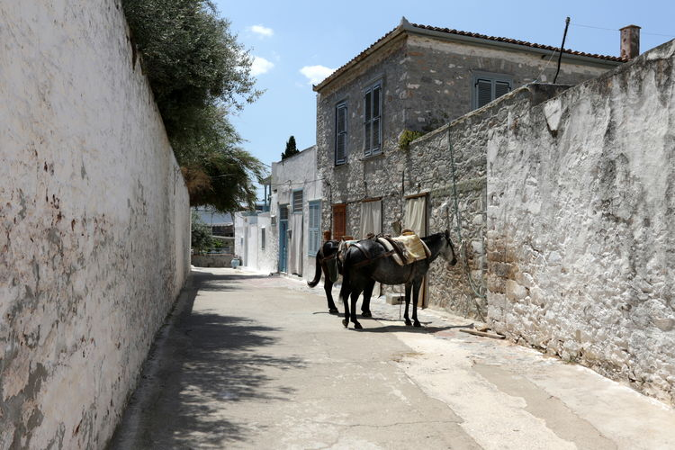 Horse standing on street amidst buildings in city