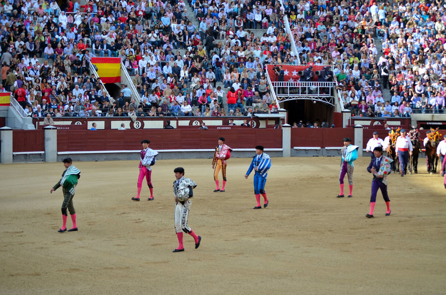 Toro Arte Traje De Luces Paseillo Plaza De Toros Torero  Rejoneador Rejoneo Toreros Large Group Of People Sport Real People Spectator Leisure Activity Togetherness Audience Fan - Enthusiast Adult People Outdoors Boys Day Soccer Crowd Men