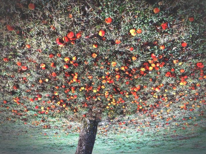 Pointillism Art Apple Tree Flip Full Frame No People Pattern Close-up Abundance Day Backgrounds Nature Outdoors Healthy Eating Food