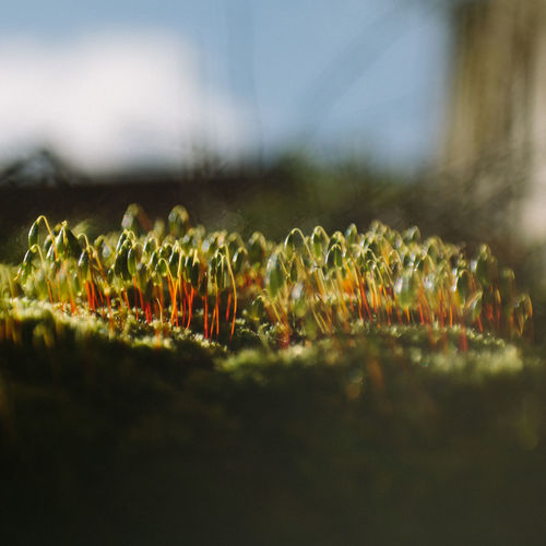 Close-Up Of Plants Growing Outdoors