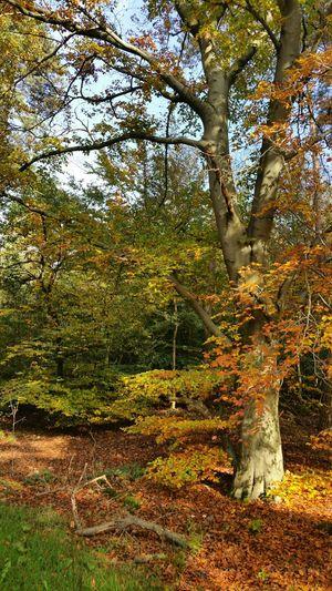 Autumn Colors Forest Autumn🍁🍁🍁 Autumn 2015 Nature Beauty In Nature Colourful