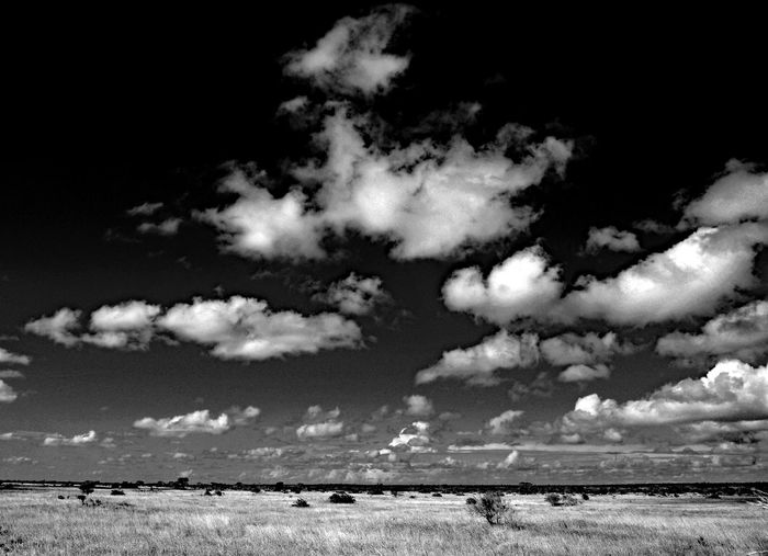 Cloud - Sky Sky Scenics - Nature Beauty In Nature Nature Land Environment No People Tranquility Tranquil Scene Field Landscape Day Outdoors Grass Horizon Over Land Non-urban Scene Horizon Cloudscape Plant