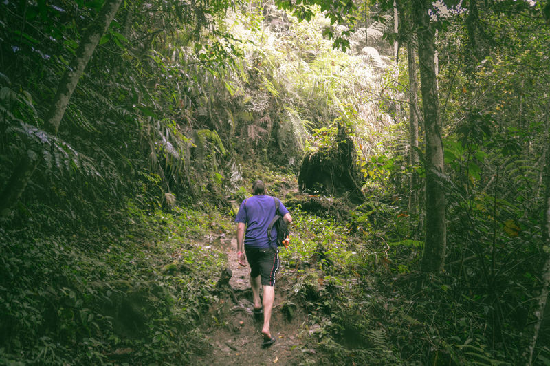 Rear view full length of man walking at forest