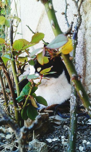 Things I Like EyeEm Gallery Cat♡ Catloversworld Rosas <3 Love Cats♡♡♡ Perfect Moment Sunset Sunset Light Beautiful Nature