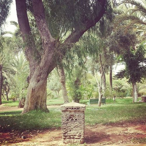 Morocco Agadir Garden