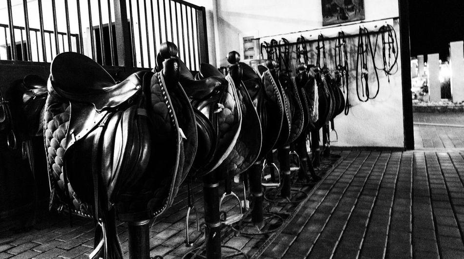 Black And White Farm Horse Horses Saddle