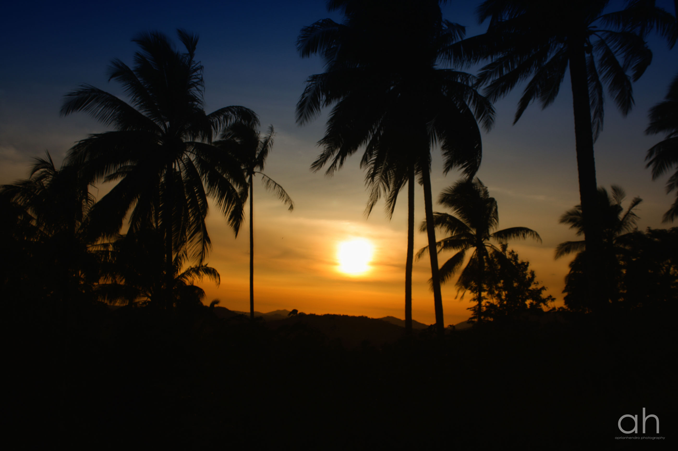 sunset, silhouette, tree, palm tree, tranquility, sky, scenics, beauty in nature, tranquil scene, nature, sun, orange color, outline, idyllic, landscape, growth, cloud - sky, low angle view, cloud, outdoors