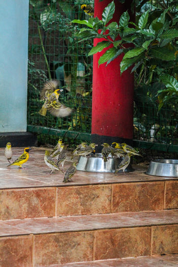 Birds on Dog Food Animal Themes Animals In The Wild Bird Day Flower Food Freshness Growth Indoors  Nature No People Perching Plant
