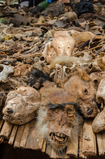 Close-up of dead animal parts for sale on vodoo market