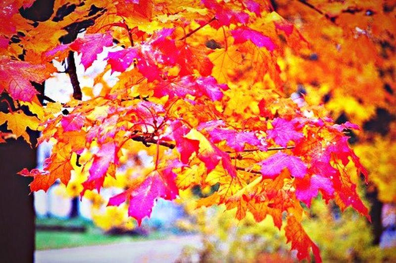 Fall Leaves Autumn Colorful