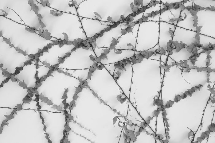 Embroidery | Awaji Yumebutai | Tadao Ando | Urban Space Textured  Fine Art Personal Perspective Embroidery Japan Through My Eyes Growth Architecture Monochrome Black And White Abstract Close-up Traveling Textured  Awaji Island Japan |