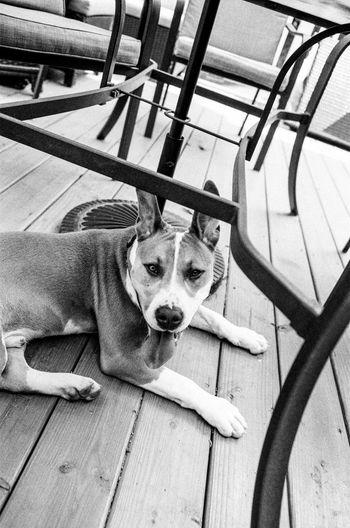 Film Ilford HP5 Plus Blackandwhite Dog Domestic Animals Film Photography Leica