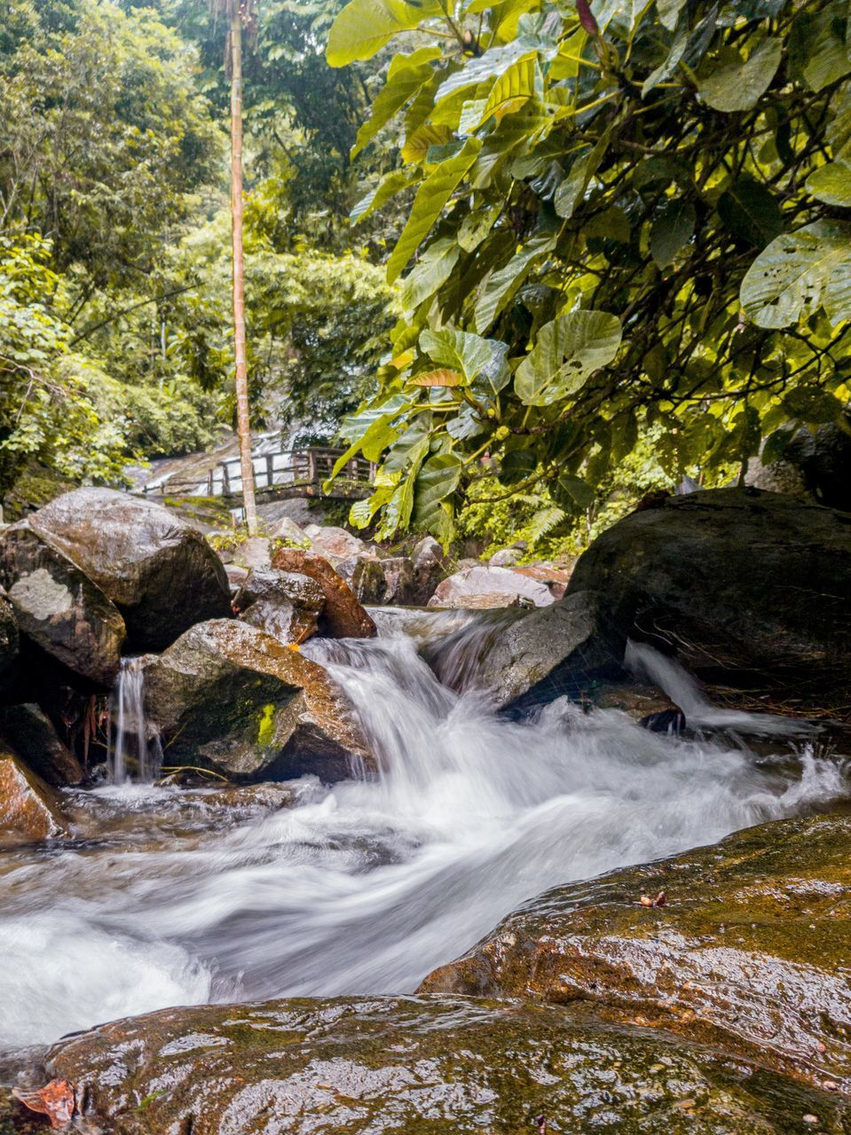 VIEW OF WATERFALL IN FOREST