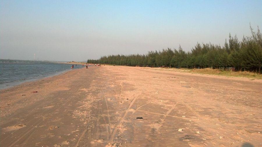 Beach with cemara udang