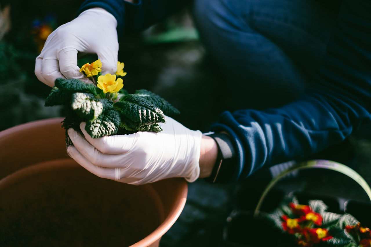 Midsection of man planting flowers in garden