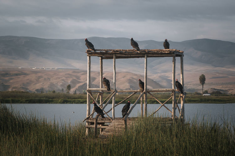 Exploring the odd surroundings of Mejia, Peru. No People Land Nature Sky Moody Dark Depression - Sadness Dramatic Tranquility Idyllic South America Latin America Non-urban Scene Mountain Lake Animal Vulture Grass Outdoors Tranquil Scene Wildlife Group Of Animals Predator Water Landscape