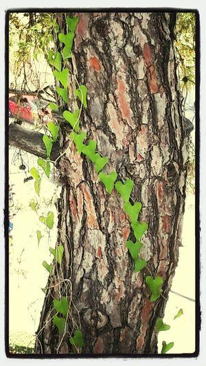 Love ♥ Street Tree Art Blatt