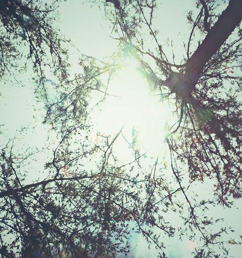 TreePorn Sun_collection Nature