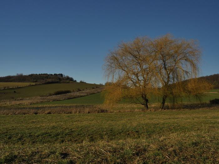 Sky Plant Land