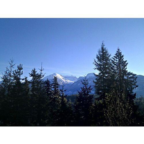 Good morning! Whistler Sunnydays Armchair