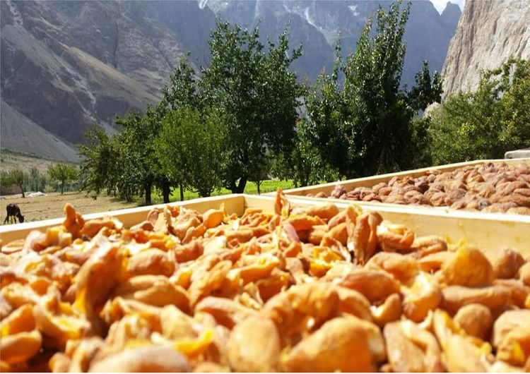 Dry Fruits Fresh On Eyeem  Fruits ♡ Gilgit Gilgit-Baltistan Hungary Pakistan Apperciate Apporicot Day Dry Food Food And Drink Freshness