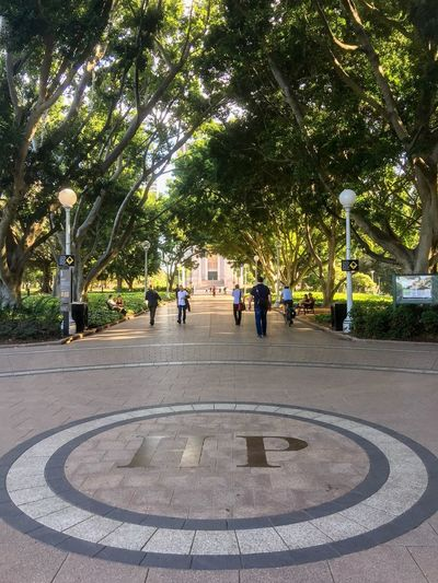 Hyde Park Tree Park - Man Made Space Outdoors People Hyde Park Sydney Australia Sidewalk Footpath Lightpost Diminishing Perspective Tourist Attraction  Incidental People Walking Around City Life Urban Park Lifestyle Nsw Botany Green Flora Path City Park Community