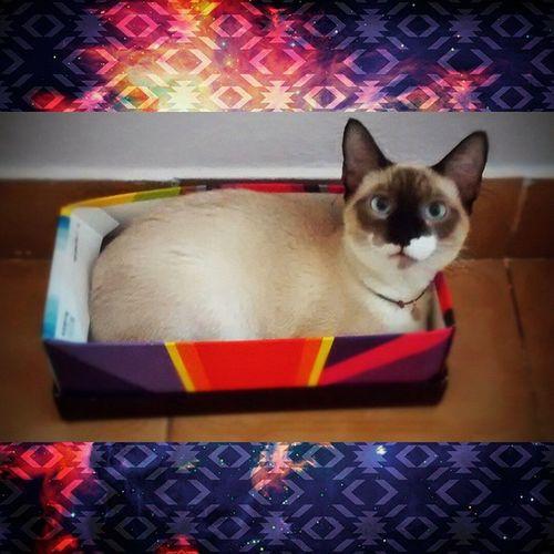 Mãe , preciso de uma caixa maior ! PosesDeAtreyu Atreyu AtreyuTheCat Instacat Catlover Cats