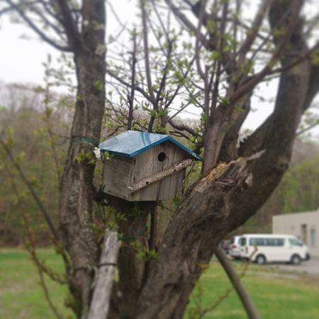 お散歩Photo 巣箱 病院の庭園にて 巣穴小さくない? 待ち時間でパシャリ