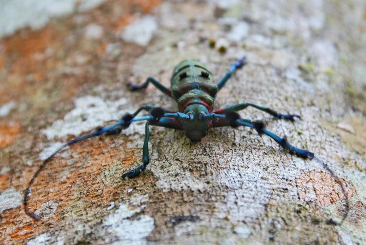 Bug Tree Trunk Animal Insect Colorful Nature LAO Close-up