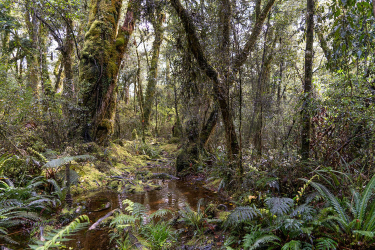 Rain forrest fiordland nstional park nz Tree Nature Growth Beauty In Nature No People Green Color Forest Outdoors Tree Beauty In Nature Springtime