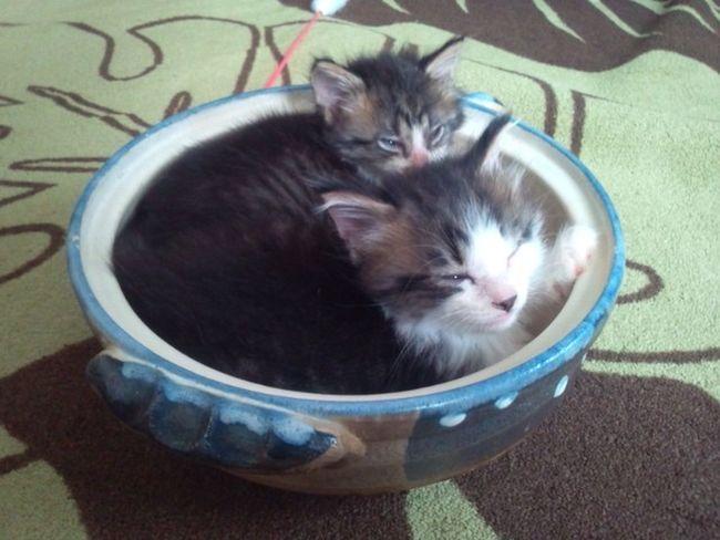 ねむい 😪 Japan Photography Cute Love Japan Cats