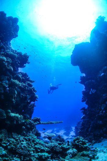 underwater photography Scubadiving Underwater Adventure Sea Water Aquatic Sport Scuba Diving UnderSea Exploration Underwater Diving My Best Photo