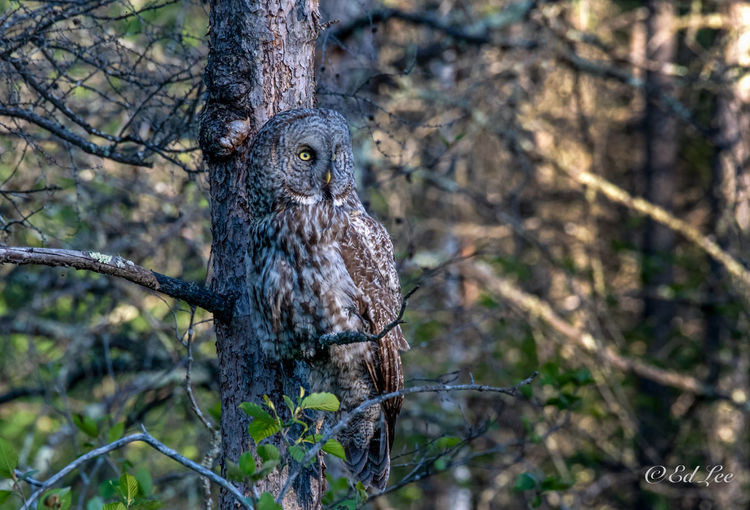 Close-up of owl perching on tree