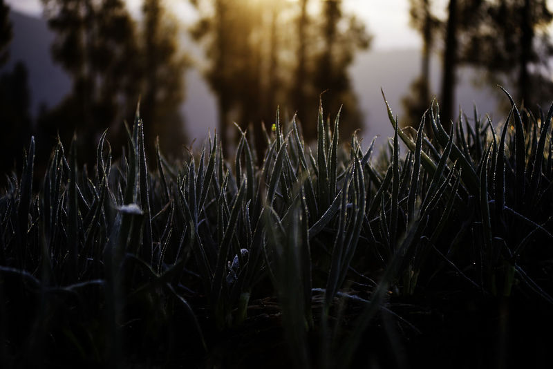 EyeEm EyeEm Best Shots EyeEm Nature Lover Beauty In Nature Close-up Day Focus On Foreground Freshness Grass Growth Nature No People Outdoors Plant Scenics Tranquil Scene Tranquility