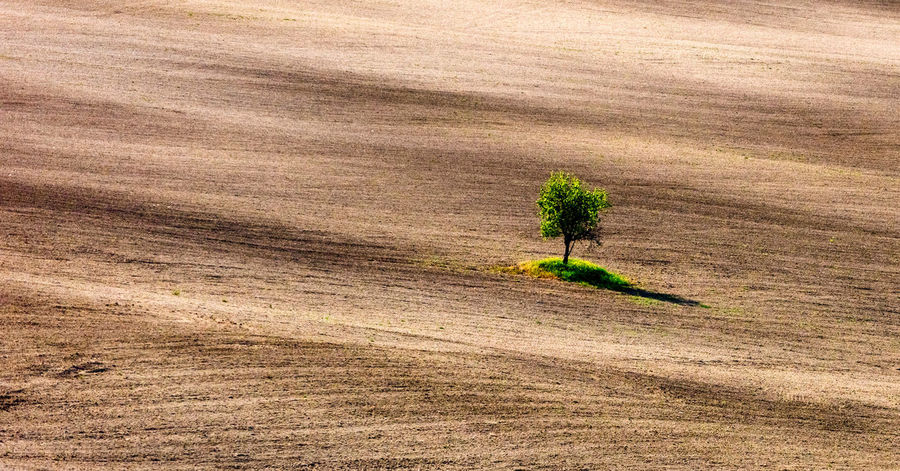 Tuscania, Italy Beauty In Nature Environment Field Grass Green Color Growth High Angle View Land Landscape Nature No People Outdoors Plant Rural Scene Scenics - Nature Sunlight Tranquil Scene Tranquility Tree