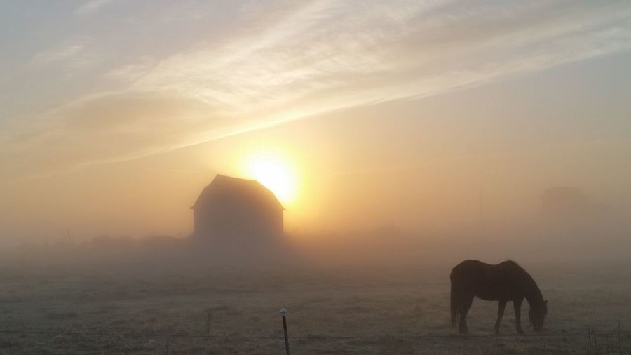 Silhouette horse grazing on field during foggy weather