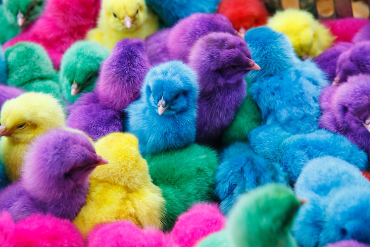 Full frame shot of multi colored birds