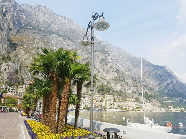 Tree Water Low Angle View Nature Sky Outdoors No People Day Lamp Post Mountain Riva Del Garda Lake Garda Scenery Tree Galaxy 7 Samsung Galaxy S7 Edge Bright Beautiful Nature The Great Outdoors - 2017 EyeEm Awards
