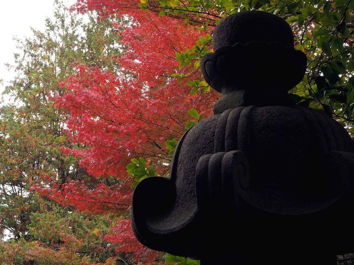 2018/12/12 Wed ☔ おはよ〜 昨日からの雨で今日も寒いね〜 お昼過ぎには雨は上がるそうだけど、朝から止んでほしかったな〜 秋は駆け足見頃だった頃の旧古河庭園の紅葉。 秋は駆け足 旧古河庭園 ファインダー越しの私の世界 ファインダーは私のキャンパス オリンパス Olympus E_M5Mark2 Om_d ミラーレス Photograph Photography Unsquares カメラ日和 お写んぽ 東京カメラ部 スナップ写真 Tokyo Beautiful カメラのある生活 あなたに見せたい写真がある 写真は心のシャッター 恋するカメラ はなマップ Tree