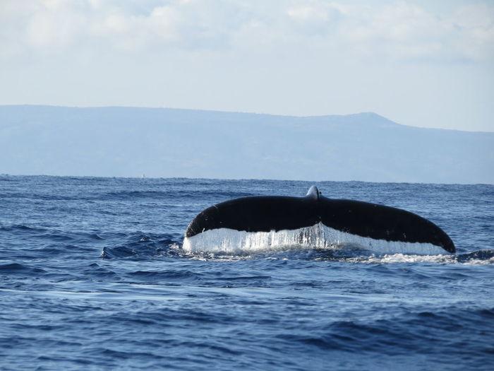 Whale splashing water in ocean against sky