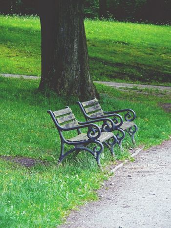 bench in the park | Absence Beauty In Nature Bench Colour Of Life Empty Footpath Grass Grassy Green Color Growth Nature No People Oberseepark Outdoors Park Park - Man Made Space Park Bench Plant Scenics Seat Sunlight Tranquil Scene Tranquility Tree Tree Trunk Colour Your Horizn