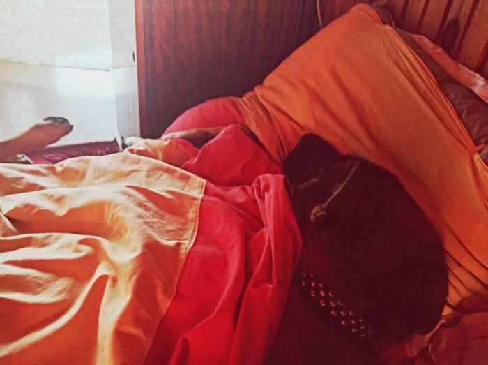 Sleep Sweet Dreams Dogsleep