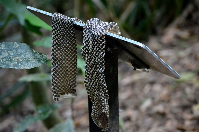 Animal Themes Animal Wildlife Animals In The Wild Nature Outdoors Shed Skin Snake Snake Scales Snake Skin