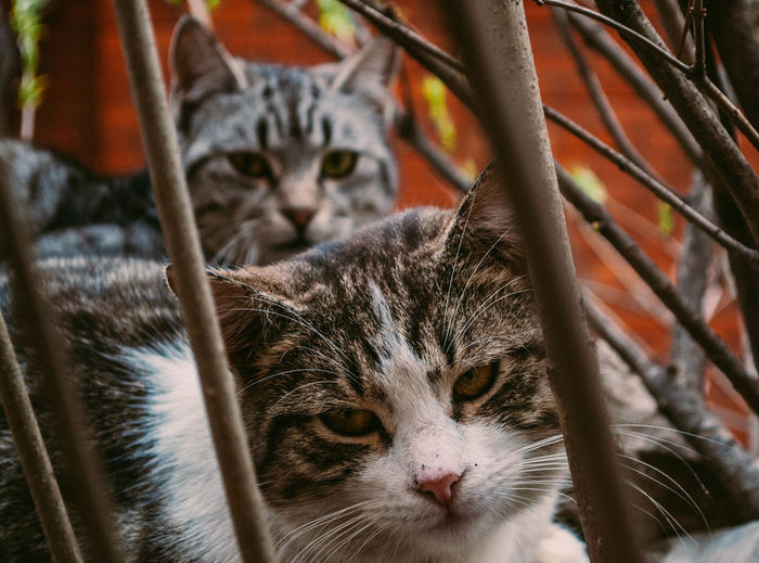 Portrait Of Cats Sitting Outdoors