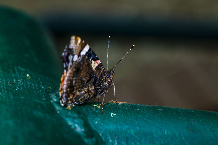 Close-up of a colorfull  butterfly on leaf